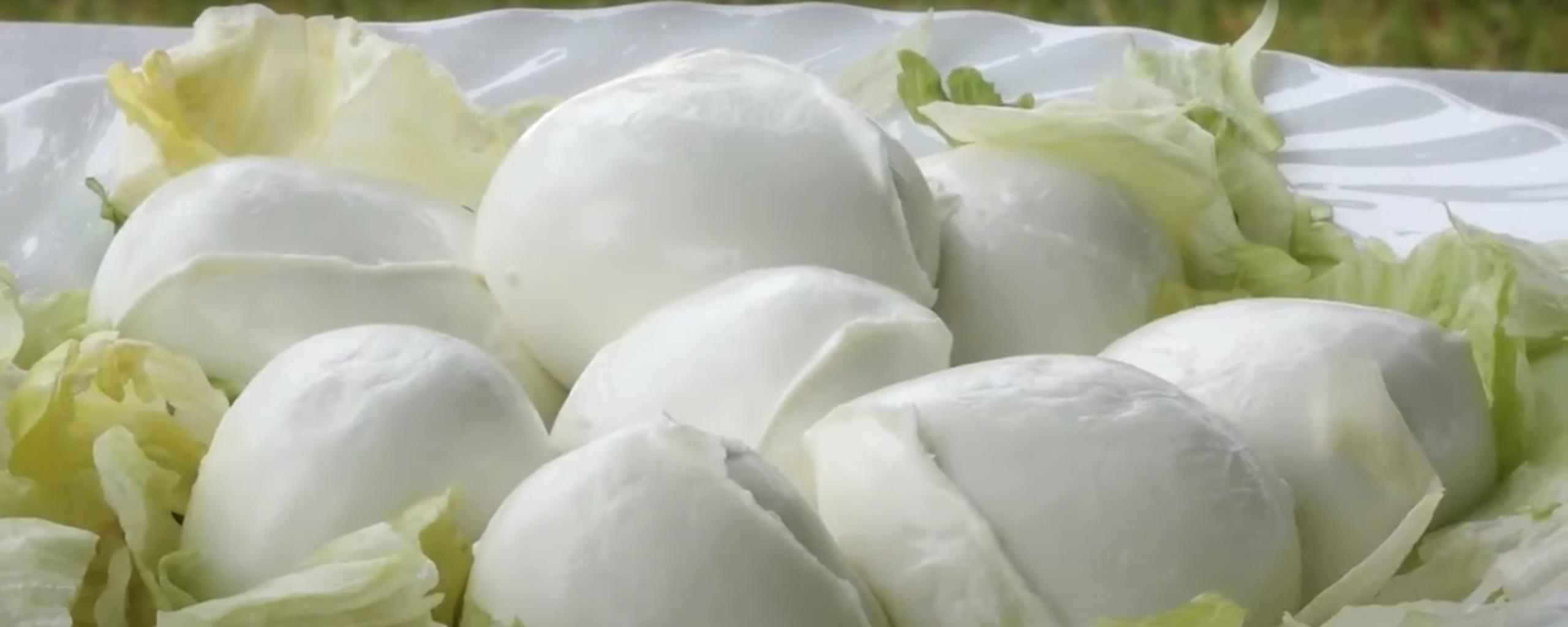 Mozzarella di bufala DOP Italiana